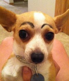 15 Pets With Eyebrows