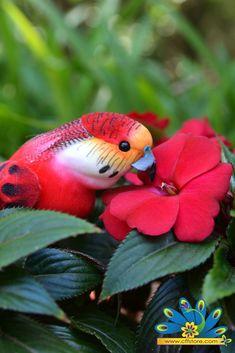 """Tropical Parrot 6.5"""""""