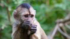 Was the Golden Rule Born in the Mind of a Monkey? - Facts So Romantic - Nautilus