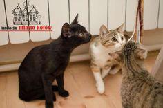 Margolcia i spółka is looking for ... #cute #cutecats #cats #caturday #kot #koty #neko #gato #katz #katzen #kittens #chat