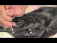 Speed painting, cat portriet by My Hansson - YouTube