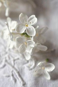 White and Delicate