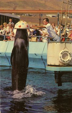 Marineland of the Pacific.  My cousin Larry trainer of Bubbles the whale