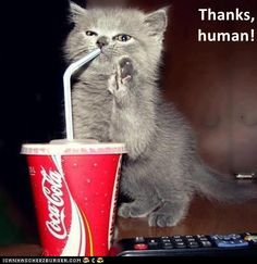 Thanks, human! http://cheezburger.com/9093652224