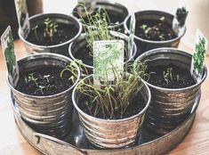 endometrioza zioła