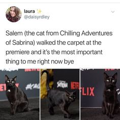 The show is trash but that cat is adorable Cute Funny Animals, Funny Animal Pictures, Funny Cute, Cute Cats, Hilarious, Adorable Kittens, A Silent Voice, Animal Memes, I Love Cats