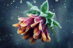 Frost work by Michaela Ihrig