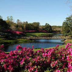 would luv to go back to this place. bellingrath gardens in Alabama. soooo beautiful.