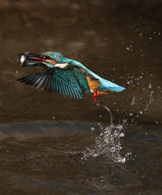 kingfisher | pic I took