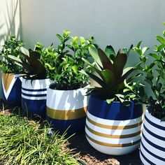 Image may contain: plant and nature Painted Plant Pots, Painted Flower Pots, House Plants Decor, Plant Decor, Cement Flower Pots, Keramik Design, Flower Pot Design, Flower Pot Crafts, Concrete Crafts