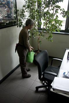 Agridea cura la cura e la manutenzione degli arredi verdi per aziende e privati. www.coopagridea.org