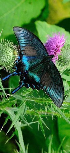 """""""Voa, pequena borboleta, você foi feita simplesmente pra voar."""" (Rebecca Takeda)"""