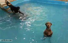 Swimming Pool Dogs.gif