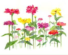 "Watercolor. ""Symphony of Zinnias"" Giclees ( prints) and notecards available for purchase.Watercolorbyhelen.blogspot.com"