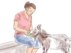 Image titled Raise Nigerian Dwarf Goats Step 1