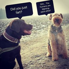 My conspirative dogs...