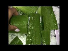 How to cut and store fresh Aloe Vera making Aloe Vera juice Fresh Aloe Vera, Tea Tree Oil, Castor Oil, Coconut Oil, Shampoo, Witch Hazel, Store, Youtube, Tee Tree Oil