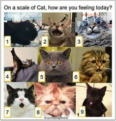 on a scale of cat - how are you feeling today? :)