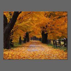 Walking Down Autumn's Memory Lane Poster