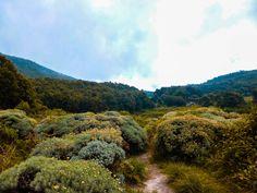 Edelweiss, the mountain flower