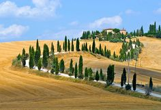 The famous winding road with cypresses between La Foce and Chianciano Therme. They were planted by Cecil Pinsent and the writer Iris Origo as part of a scheme to improve the landscape of what was then among Italy's most desolate regions.