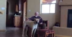 Elderly Man with Alzheimer's Can't Speak Until He Sees Dog - The BarkPost