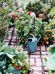 The back garden features vegetables, herbs and flowers, including Anna's beloved nasturtiums and zinnias. Small Space Gardening, Garden Spaces, Joy Inside Out, Colorful Apartment, Queenslander, Timber House, Garden Features, Australian Homes, Moroccan Style