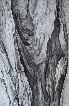 Realistic Pencil Drawings, Unique Drawings, Ink Pen Drawings, Texture Sketch, Texture Drawing, Wood Texture, Texture Art, Dry Tree, Tree Study