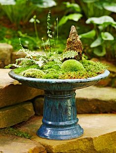 Moss dish gardens allow you to get up close and personal with a lush green landscape. Our step-by-step instructions get you started, and 6 dish garden designs with complete plant lists give you inspiration for your own creation. Shade Garden, Garden Plants, Indoor Plants, House Plants, Flower Gardening, Air Plants, Pot Jardin, Dish Garden, Garden Care