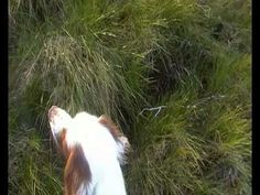 Paddy on snipe - from Granaghburn3 on youtube