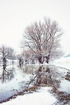 Photograph Wintry Days by Oliver Leicher on 500px