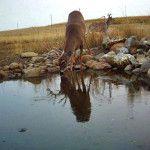 Simplicity of Deer Movement
