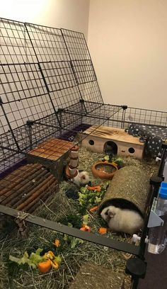 Indoor Guinea Pig Cage, Guinea Pig House, Baby Guinea Pigs, Guinea Pig Care, Animal Room, Animal House, Bunny Cages, Rabbit Cages, C&c Cage