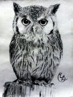 This with more facial definitions. Owl Photos, Owl Pictures, Bird Drawings, Animal Drawings, Owl Sketch, Owl Artwork, Owl Tattoo Design, Beautiful Owl, Black And White Drawing