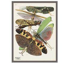 Seguy Grasshoppers Framed Print | Pottery Barn