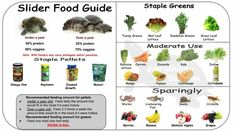 Food Guide infograph for red eared slider RES turtle Red Eared Slider Tank, Baby Red Eared Slider, Yellow Bellied Slider, Red Eared Slider Turtle, Aquatic Turtle Tank, Turtle Aquarium, Aquatic Turtles, Turtle Pond, Turtle Care