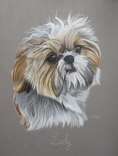 """Lucky"" Shih-tzu aux pastels by Cindy Barelett Perro Shih Tzu, Shih Tzu Puppy, Shih Tzus, Animal Books, Pastel Art, Dog Portraits, Animal Paintings, Dog Art, Artwork"