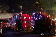 yet another two elegantly decorates elephants parade with their mahouts @ the Kandy Esala perahera