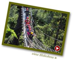 Glide through the top of a rainforest canopy along a series of eight cable zip lines along the border of the Tongass National Forest. Navigate three aerial bridges suspended among spruce, hemlock and cedar trees. Alaska Destinations, Alaska Tours, Halibut Fishing, Tongass National Forest, Asia Continent, Ketchikan Alaska, Cedar Trees, Alaska Cruise, Amazing Adventures