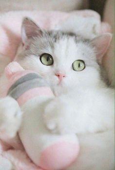 Cats and kittens kitty gatos 26 Ideas for 2019 Beautiful Kittens, Cute Cats And Kittens, Pretty Cats, Kittens Cutest, Animals Beautiful, Beautiful Stories, Cute Baby Animals, Funny Animals, Animals Images