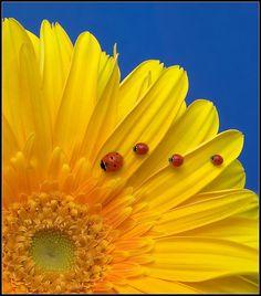 I <3 ladybugs