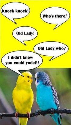 Oldladeehooo!