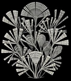 Diatoms. Ernst Haeckel. Too fascinating!                                                                                                                                                      Mehr