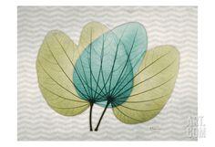 Citrus Orchid Tree Art Print by Albert Koetsier at Art.com