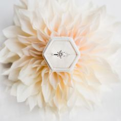 Stunner engagement ring in our Hikari velvet ringbox Styling  florals  photography marie_lilelements Velvet ringbox artiste.saku Most Beautiful Pictures, Stationary, Instagram Posts, Image