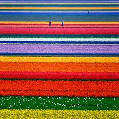 Flower fields...