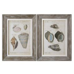 Uttermost Vintage Shell Study by Grace Feyock 2 Piece Framed Original Graphic Art Set