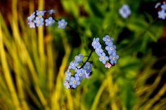 Little cute flowers on SFSU campus!