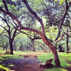 Sometimes beauty lies in the stories of the empty benches and a few lone souls . . . Sunday morning walk at Cubbon Park Bangalore