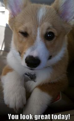 Having A Bad Day? Corgis To The Rescue!